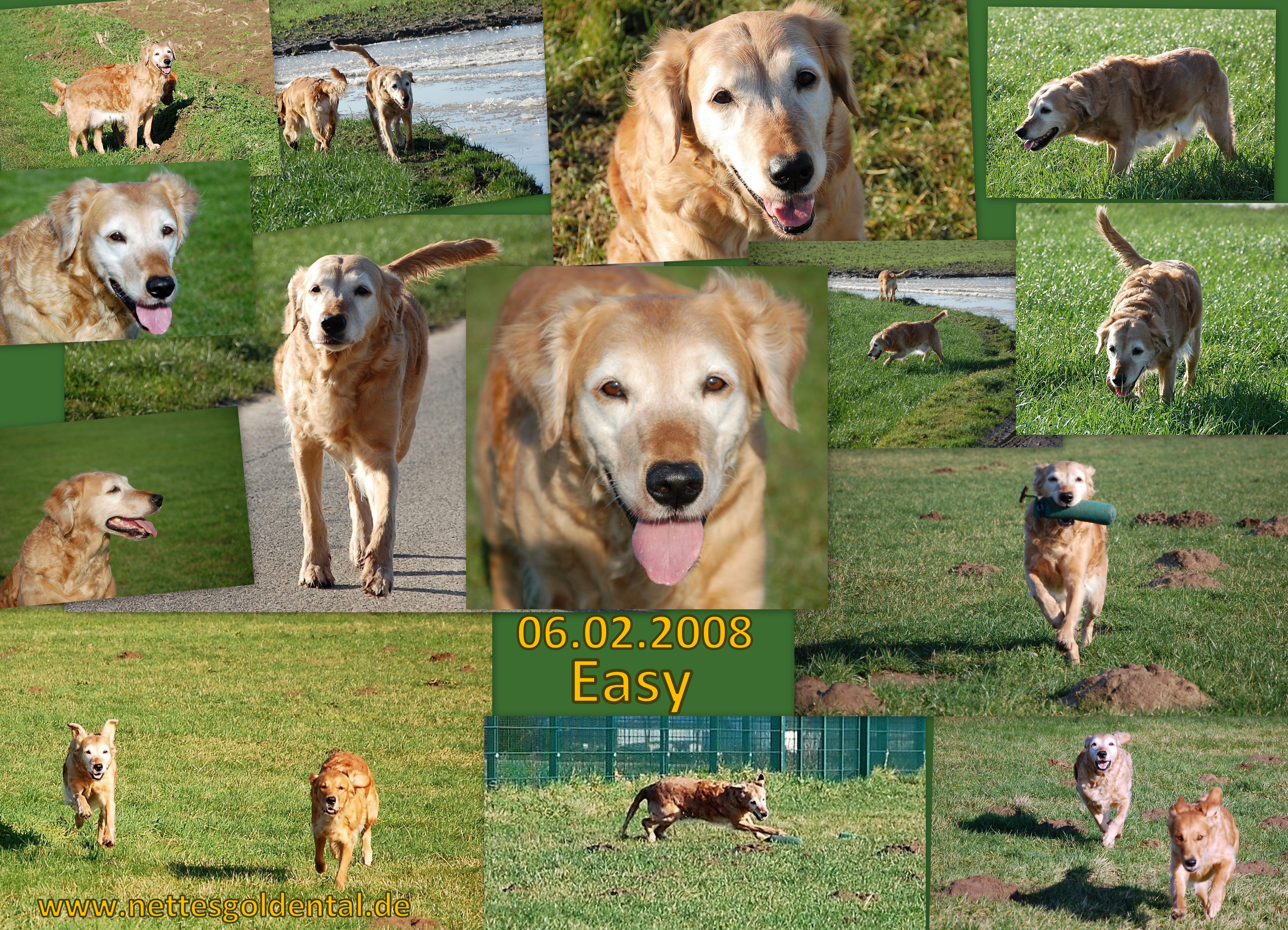 Nettes Golden Tal - Golden Retriever Zucht